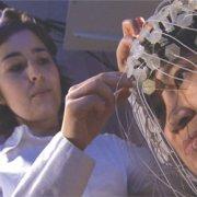 The brain in mirror
