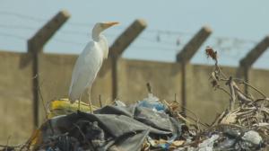 Afrique : La guerre des sacs plastiques