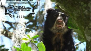 The Secret Life of the Spectacled Bear