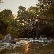 Les derniers Hommes éléphants